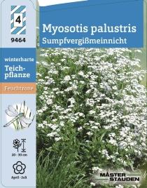 myosotis palustris 39 alba 39 sumpfvergi meinnicht. Black Bedroom Furniture Sets. Home Design Ideas