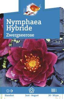 nymphaea hybr 39 froebeli 39 zwergseerose winterharte. Black Bedroom Furniture Sets. Home Design Ideas
