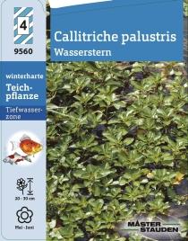 callitriche palustris wasserstern winterharte stauden f r lebendige g rten. Black Bedroom Furniture Sets. Home Design Ideas