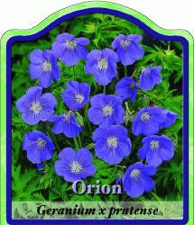 geranium pratense 39 orion 39 storchschnabel winterharte stauden f r lebendige g rten. Black Bedroom Furniture Sets. Home Design Ideas