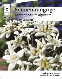 leontopodium alpinum 39 stella bavaria 39 edelwei. Black Bedroom Furniture Sets. Home Design Ideas