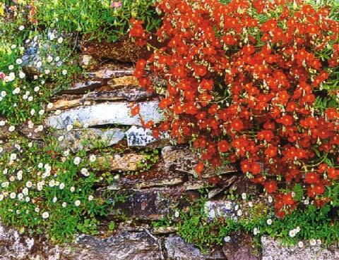 Berühmt Trockenmauer - Winterharte Stauden für lebendige Gärten. &DX_27